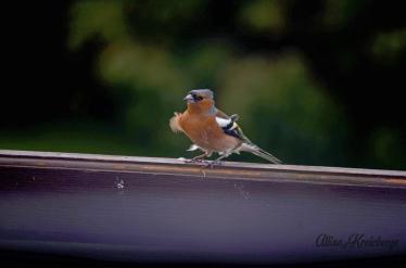 Bird wm