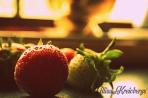 strawberries wm